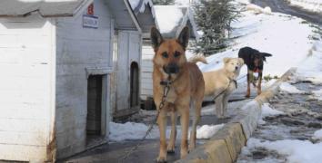 Bağcılar'da sokak hayvanları koruma altında