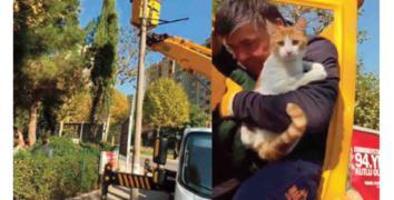 Küçükçekmece Belediyesi ekipleri mahsur kalan kediyi kurtardı